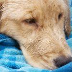 Brakende hond; ziekte of iets verkeerd gegeten?