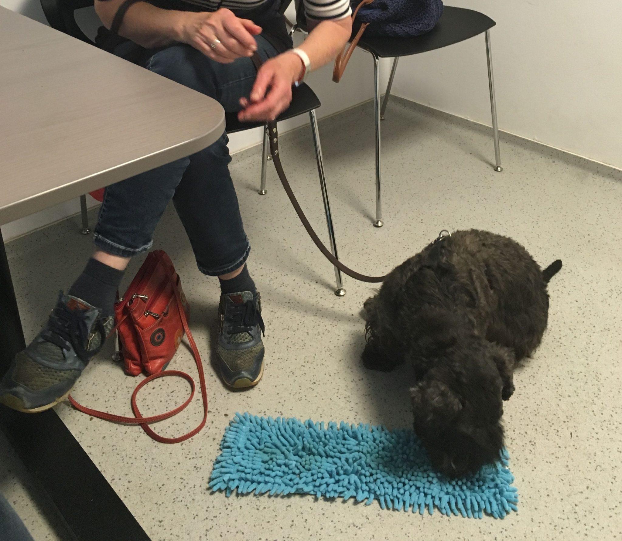 animalytics-gedrag-hond-pdcc-vuurwerk-plecy-2-valerie-jonckheer-sheehy