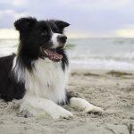 Epilepsie leefbaar maken voor hond en baas