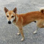 Kreupele hond: splinter of tumor?