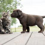 Kat krabt pup: grote kans op oogletsel
