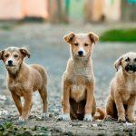 Angststoornissen en asielhonden