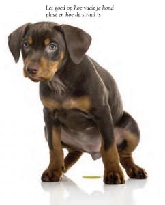 hoe-vaak-plast-je-hond