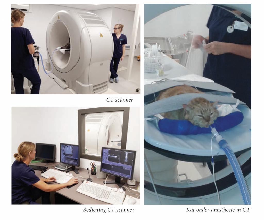 CT-scan-hond-en-kat