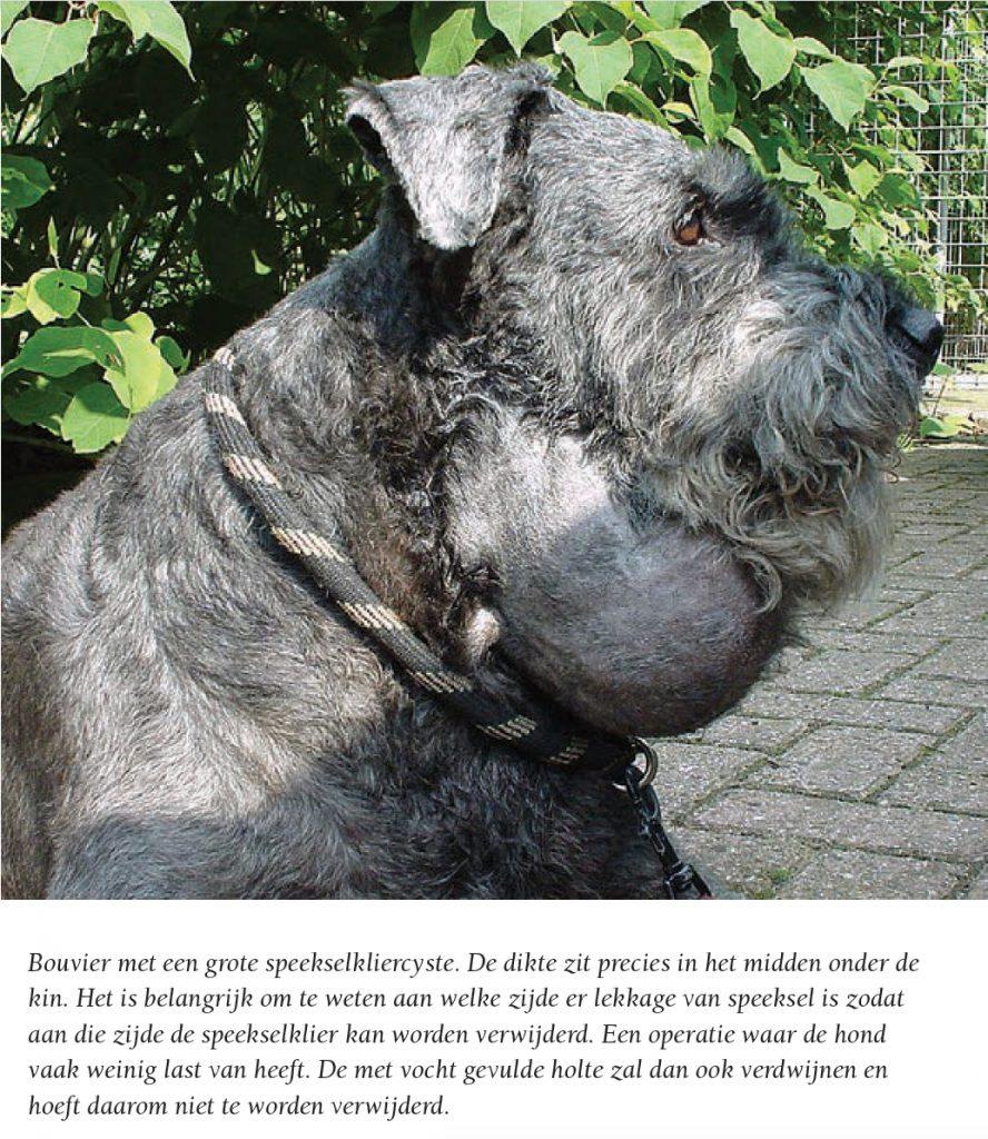 hond-met-bult-in-zijn-nek