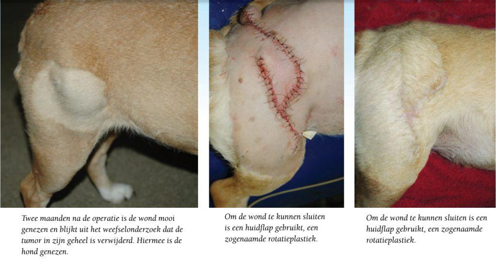 verwijderen-tumor-hond