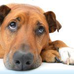 Vreemde bulten en bobbels bij huisdieren