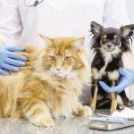 Endoscopie bij huisdieren