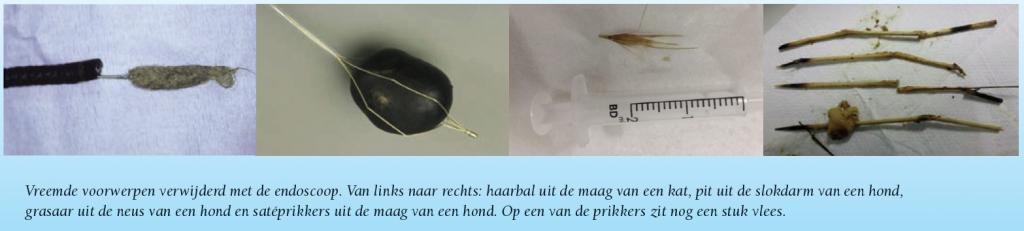 vreemde-voorwerpen-verwijderen-met-endoscoop